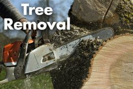 Tree-Removal-Web